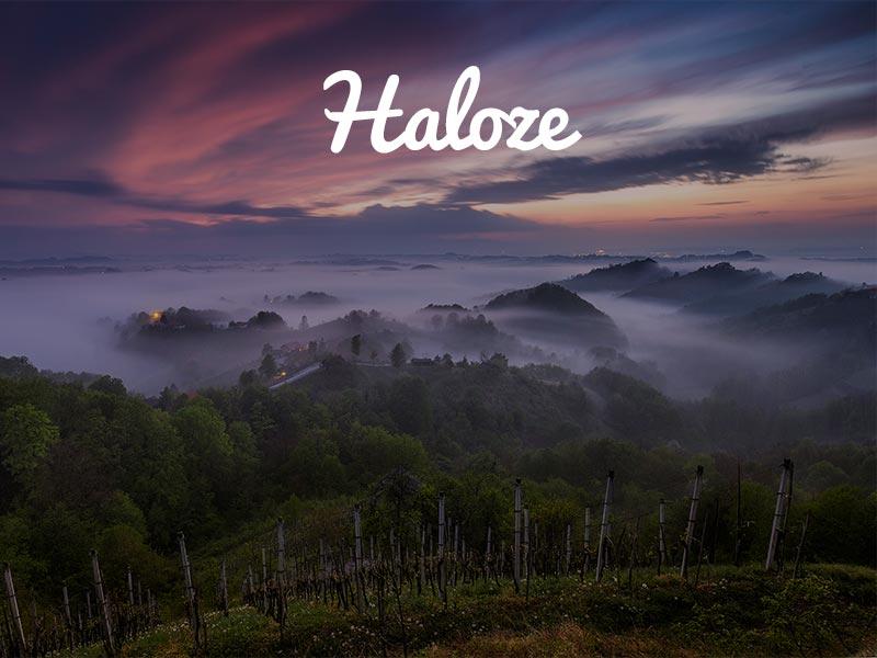 panntour-haloze